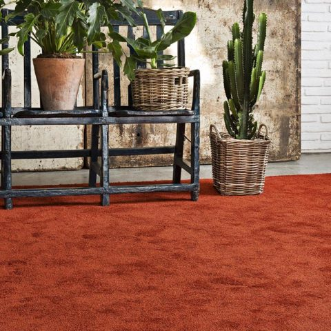 macetas con cactus sobre alfombra de pelo largo i love it kp alfombras a medida